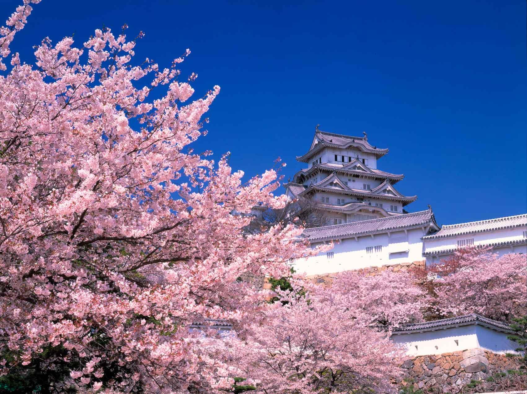 HimejiCastle_Spring