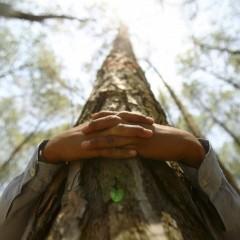 Despre îmbrățișări și copaci