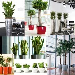 5 plante de interior care depoluează aerul