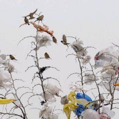 Pungile de plastic – probleme și soluții