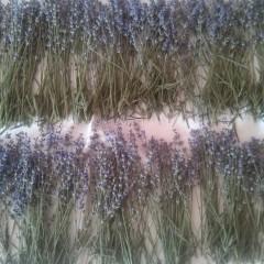 Agenda grădinii mele cu miros de lavandă