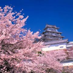 Japonia Eco – ţară minune!