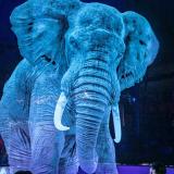 Inovație în industria circului. Au schimbat animalele pe holograme!